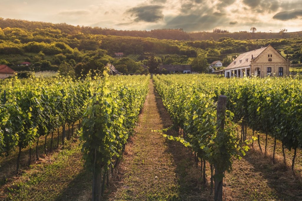 Stewardship – Vineyard